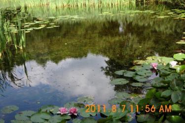 Steinhude_07-08-2011_015.jpeg
